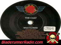 Cult - wild flower - pic 4 small