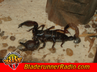 Scorpions - the zoo - pic 9 small